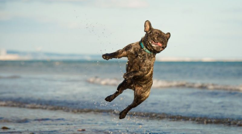 Training your dog : The 3 must have equipments
