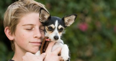 What you must know about puppy Obedience Training